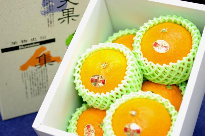 紅まどんな通販 お歳暮に愛媛県ゼリーの様な食感が特徴の柑橘を販売取寄。約6玉~約7玉