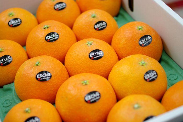 紅まどんな通信販売 お歳暮に愛媛県ゼリーの様な食感が特徴の柑橘を販売取寄。約10玉~約15玉