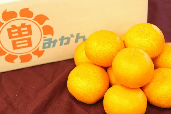 マル曽みかん 香川県三豊市曽保地区 お歳暮蜜柑 5kg S~L