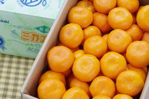 ミカエースJA三ヶ日みかん特選通販 お歳暮静岡みかん販売 糖度12度以上の早生・青島 5kg S〜2L