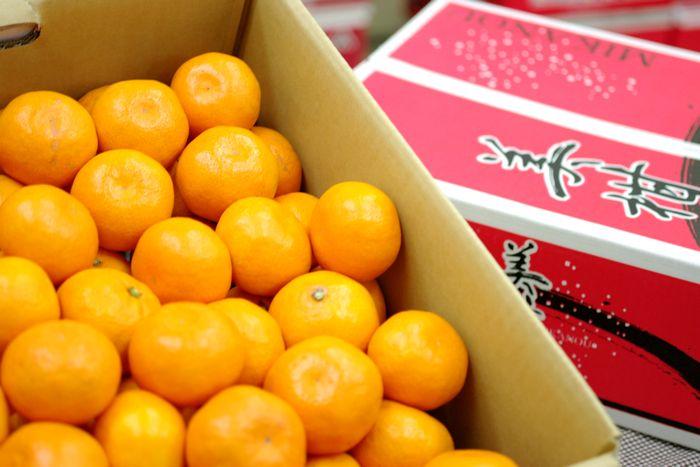 美柑王みかん販売 愛媛南農協 みかんおう蜜柑御歳暮通販でお取り寄せ 糖度約12度 5kg S~L