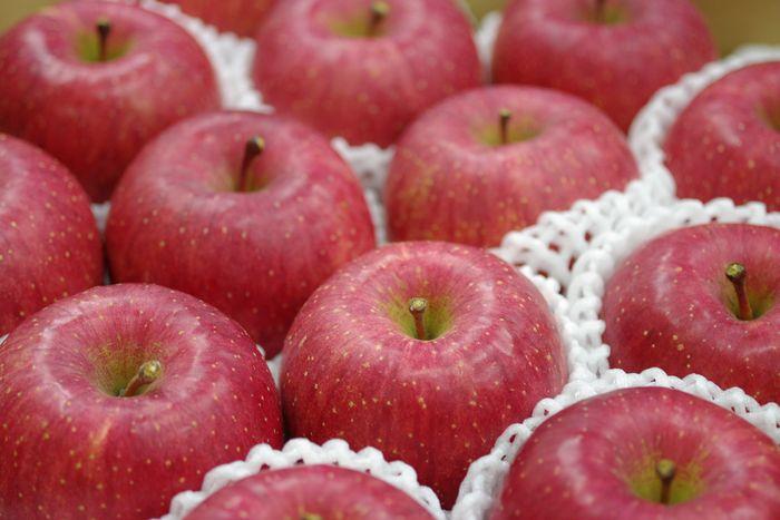 長野ふじりんごお取り寄せ販売 信州サンふじお歳暮ギフト通販 糖度約14度 5kg 約14玉~約18玉