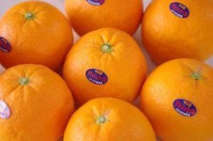 デリッシュネーブルオレンジ 愛媛県中島産  約2・5kg  約8玉〜約12玉