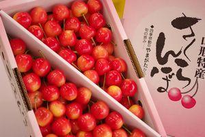 南陽さくらんぼ通信販売。山形さくらんぼ販売で取寄!大粒桜桃で独特の芳香 1kgバラ詰め L~3L