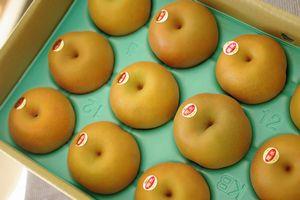 南水梨取寄販売 糖度約13度の和梨を通販で。約5kg 約10玉~約16玉 長野・他産地