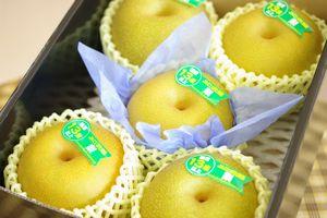 新潟幸水通販  しろね地区糖度約13度の和梨を販売取寄。一糖賞・糖鮮確実 小箱 約5玉~約6玉 新潟産