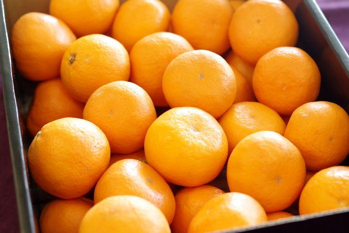 かんきつ中間母本農6号販売 種なしで大変希少な柑橘。かんきつちゅうかんぼほんのうろくごう通販 山口県・他産地 約3kg