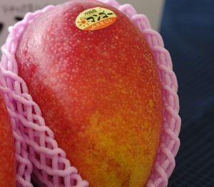 沖縄マンゴー販売 御中元に通販でお取り寄せ 大玉1玉