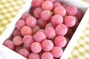 オリンピア葡萄通販 糖度約20度別名はちみつ葡萄を販売取寄。約1kg 化粧箱 山形・他産地