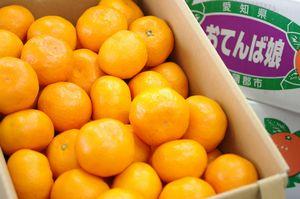 おてんば娘みかん販売 愛知県蒲郡産 お歳暮みかん通販でお取り寄せ 糖度12度以上 5kg 2S~L
