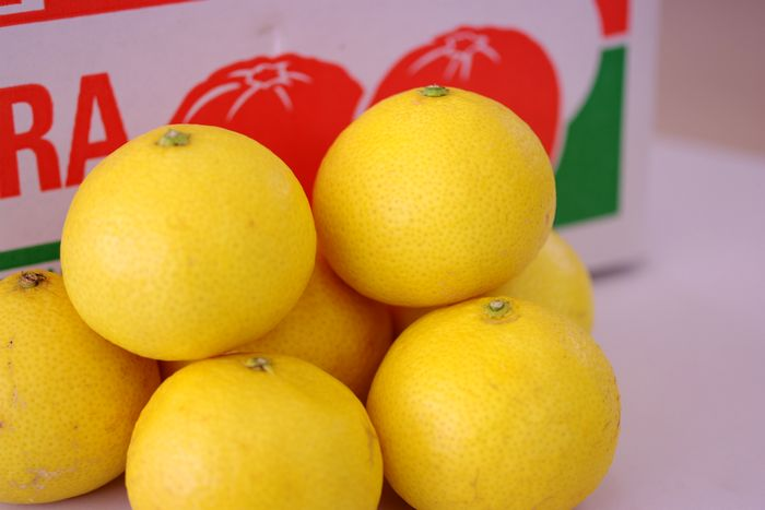 黄金柑(おうごんかん)通販 爽やかな香りが特徴のゴールデンオレンジを販売取寄。小箱 約2kg 静岡・他産地