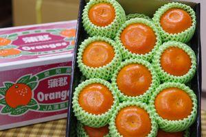 麗紅柑れいこうかん通信販売 せとかと同じ交配品種の柑橘を販売取寄。中箱 愛知・他産地