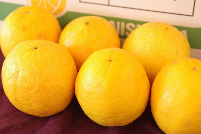 柑橘レモネード 約5kg 2S~2Lサイズ