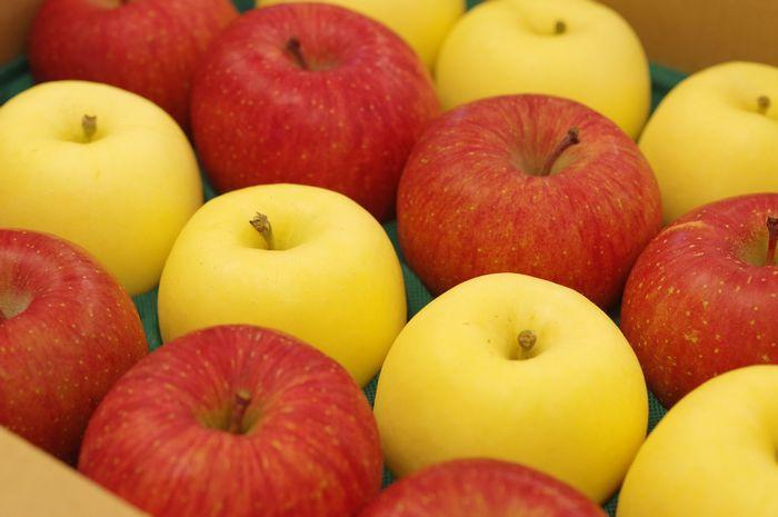 御歳暮 謹賀新年に 紅白詰合 ふじりんご約7玉 はるかりんご約7玉 お正月用林檎に
