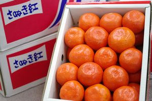 さぬき紅みかん通販 お歳暮香川県みかんに。小原紅早生は果皮・果肉も紅色 糖度12・5度以上 約2・5kg