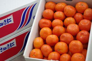 金時紅みかん販売 お歳暮香川県蜜柑。小原紅早生は果皮・果肉も紅色 糖度11・5度以上 5kg