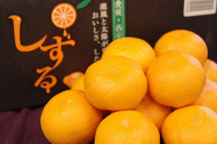 雫流しずるみかん 5kg S~L【愛媛県産】糖度12・5度以上!