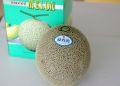 タカミメロン通販 熊本産。熊本貴味メロンを販売取寄。果物ギフトに 1玉