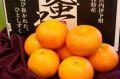 蜜るいよかん取寄販売 愛媛県保内共選ブランドの伊予柑を通販で。約9〜10kg 愛媛産