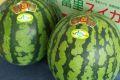 富里西瓜通信販売 千葉産。一果取りスイカ販売取寄。果物ギフト 2玉  L~4L
