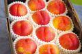 スイートビーナス通販 幻のネクタリン油桃を販売取寄。約8玉〜約12玉 山形・他産地