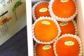 新秋柿(しんしゅうがき)通販 和歌山温室栽培で糖度約18度の柿を販売取寄。約5玉~約7玉 和歌山産