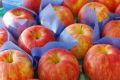 シナノドルチェりんご取寄販売 長野オリジナルシナノリンゴを通販で。約5kg 約14玉~約20玉 長野県産