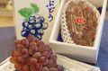 紫苑(しえん)葡萄通販 糖度約18度の岡山県冬ぶどうを販売。1房 約550g 岡山産