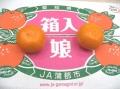 箱入娘みかん販売 愛知県蒲郡産 お歳暮みかん通販でお取り寄せ 糖度12度以上 5kg S〜L