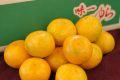 ゆら早生みかん通販 「味一ゆら」和歌山県統一ブランド極早生みかん販売 お取り寄せ。糖度11度以上 5kg S~L
