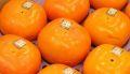 秋王柿(あきおうがき)通販 福岡県産の甘柿で種がない新品種 約6玉〜約10玉
