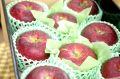 シナノホッペ林檎通信販売 真っ赤に色づく長野限定りんごを販売取寄。中箱 約7玉~約9玉 長野産