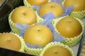 秋月梨(あきづき梨)通販 糖度約13度の和梨を販売取寄。中箱 約7玉〜約9玉 千葉・他産地