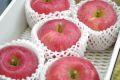 ふじりんご販売 糖度約13度のサンふじりんごを販売取寄。小箱 約5玉~約6玉  青森・他産地