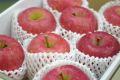 ふじりんご通信販売 糖度約13度のサンふじりんごを販売取寄。中箱 約7玉~約9玉 青森・他産地
