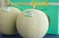 旭村マスクメロン通信販売 茨城産。糖度の見えるアールスメロンを販売。果物ギフトに 糖度約13度 2玉