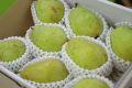 西洋梨バラード通信販売 山形県の食味がラフランスに似た洋梨を販売取寄。中箱 約7玉〜約9玉 山形産
