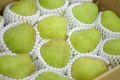 西洋梨バラード取寄販売 山形県の食味がラフランスに似た洋梨を通販で。約5kg 約10玉〜約18玉 山形産