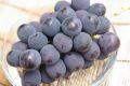 ピオーネ葡萄通販 大粒系の黒ぶどうを販売取寄。1房 約550g 山梨・他産地