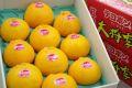 大将季(だいまさき)デコポン通販 お歳暮に鹿児島の赤いデコポンを販売取寄。12月配送 中箱 約8玉~約10玉