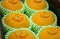 大将季(だいまさき)デコポン通販 果物ギフトに鹿児島の赤いデコポンを販売取寄。小箱 約6玉 鹿児島県産