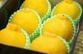 熊本デコポン通販 糖度約13度の不知火(しらぬい)を販売取寄。小箱 約6玉 熊本産