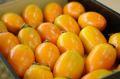 筆柿(ふでがき)通信販売 愛知県幸田町特産の珍宝柿を販売取寄。約5kg 約30玉~ 愛知産