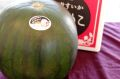 がぶりこスイカ 黒皮・ほぼ種なし・果肉は赤色 L~4L 1玉入 鳥取県