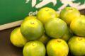 極早生みかん 紀南の木熟みかん 極天(てん) 糖度11度以上 5kg S~L 和歌山県産 9月中旬から10月下旬頃