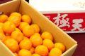 当店オリジナル箱。紀南の木熟みかん通販 極天(ごくてん) お歳暮和歌山みかん販売。糖度13度以上 2.5kg S~L