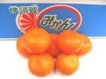 横須賀みかん販売 原田柑橘園完熟ハウスみかんを取り寄せ。糖度約14度 神奈川県産 5kg