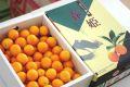 金柑春姫(はるひめ)販売。鹿児島県JAさつまの糖度16度きんかんを取寄せ。1箱約2kg
