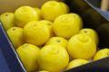 柑橘はるか通販 爽やかな甘さの春香を販売取寄。中箱 約3kg 愛媛・他産地