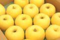 年明け出荷 はるかりんご 春香の恋 糖度15以上 岩手県 通販取寄 約5kg 14玉~約18玉 蜜入でありません